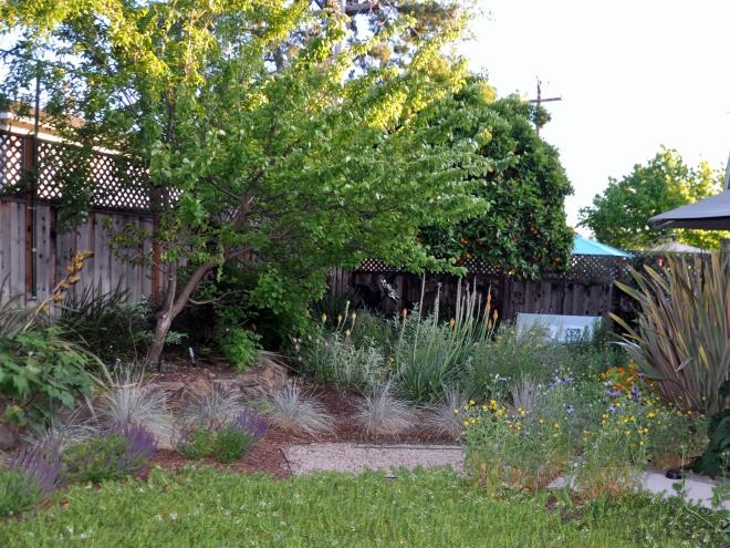 native plants back garden