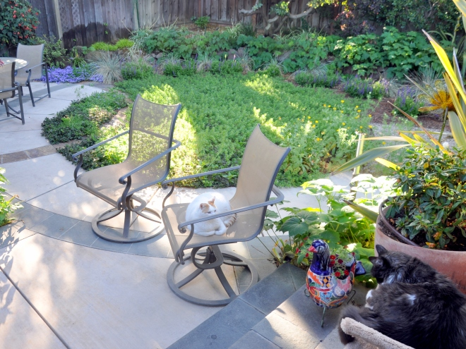 back garden patio and native plants
