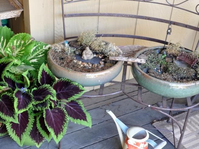 miniature peace garden fizzle