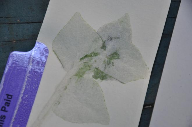 File folder leaf print