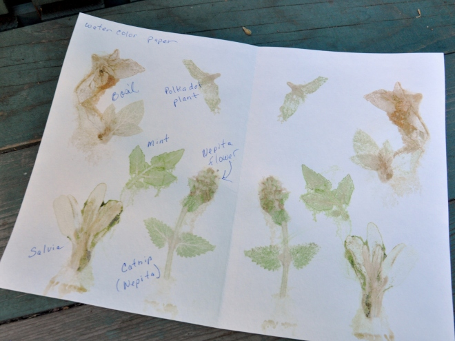 chlorophyll prints watercolor paper