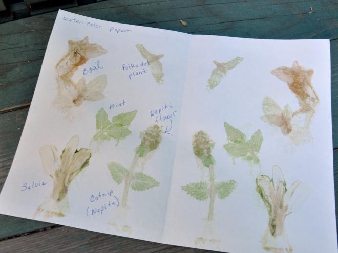 chlorophyll prints watercolor paper