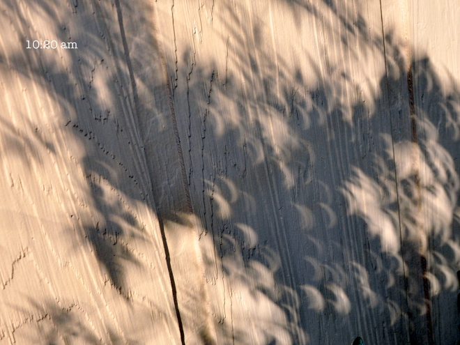 crescent shaped shadows eclipse