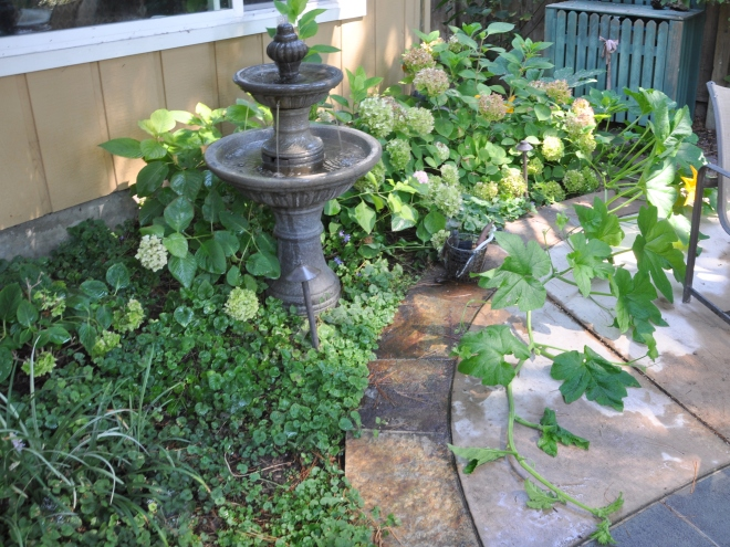 pumpkin vine on patio