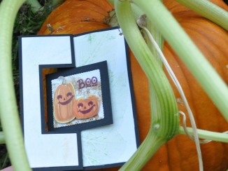 Pumpkins on the face of the card