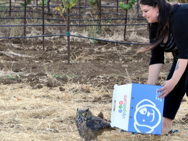 Ashley Kinney owl release