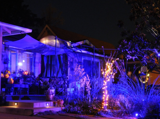 Front garden illuminated with blue lights