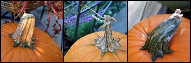 pumpkin penduncles