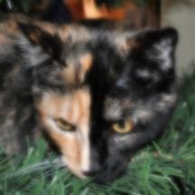 Soft-focus Tessa