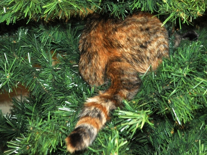 Tessa's back side in the Christmas tree