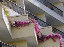 Bougainvillea cascading over the hotel balcony