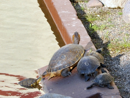 A bale of turtles