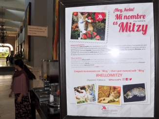 Mitzy's back story