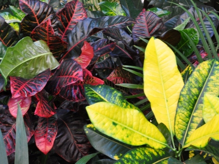 Vivid yellow and red foliage
