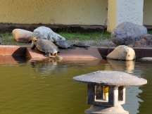 More turtles soaking up the sun