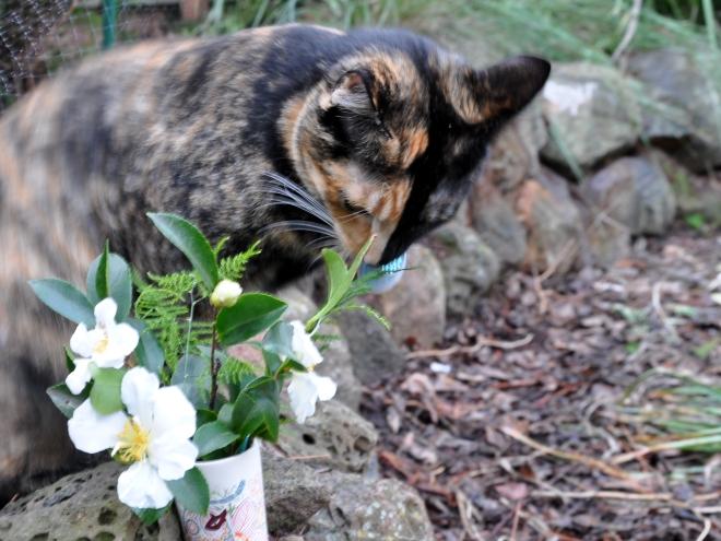 cat with cat vase
