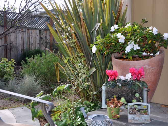 Garden patio potted plants