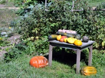 The late summer harvest