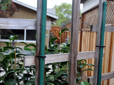 Repurposed garden trellis and stakes, attached with zip ties