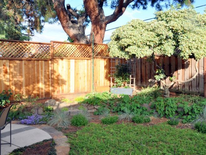 garden near back fence