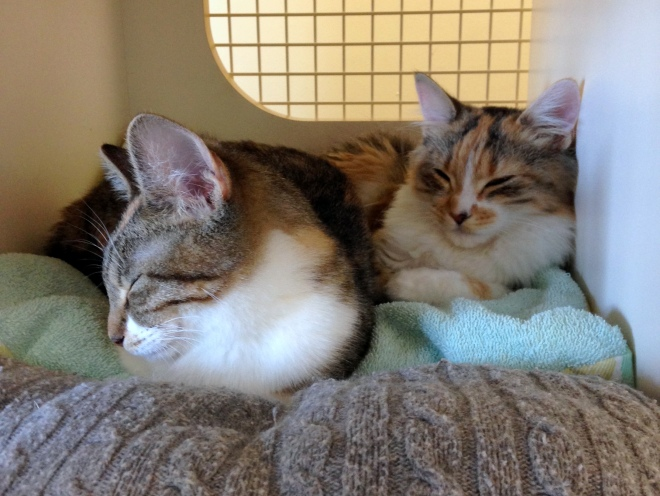 pair of cats for adoption