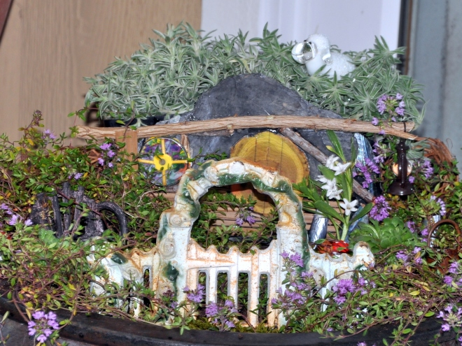 Miniature kiwi garden