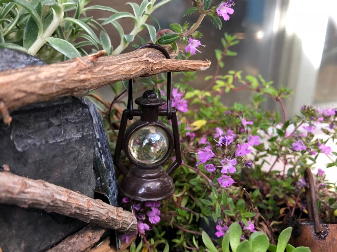 Miniature New Zealand garden plants