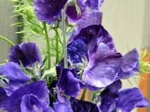 Dark purples with a spring of Nigella