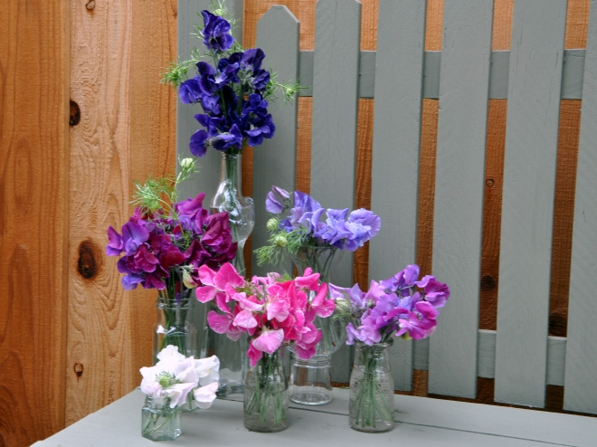 sweet peas and nigella