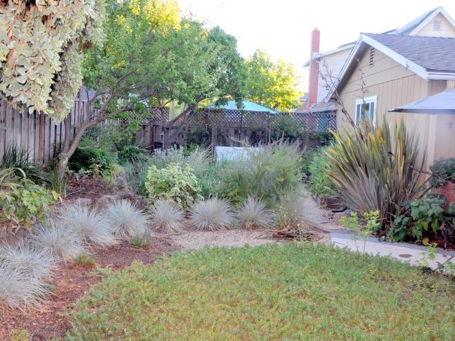 perennial plants back garden