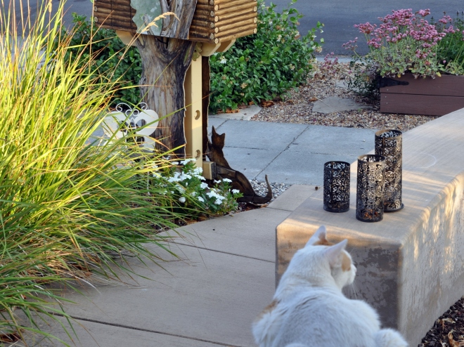 Mouse the cat and little free library