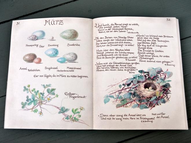 Edith Holden illustrations