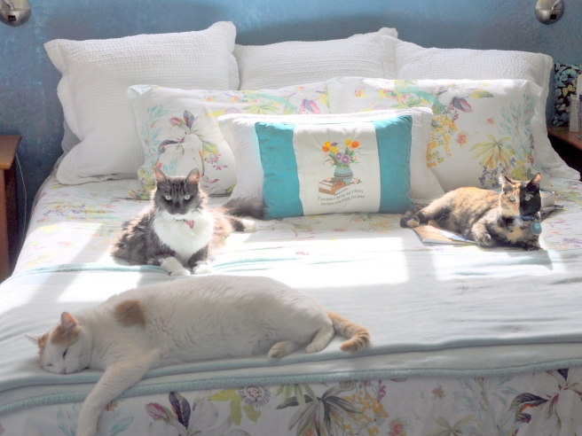 Lindy, Mouse and Tessa soaking up some sun, embroidered pillow by Marlene H.