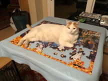 Mouse keeps the puzzle warm