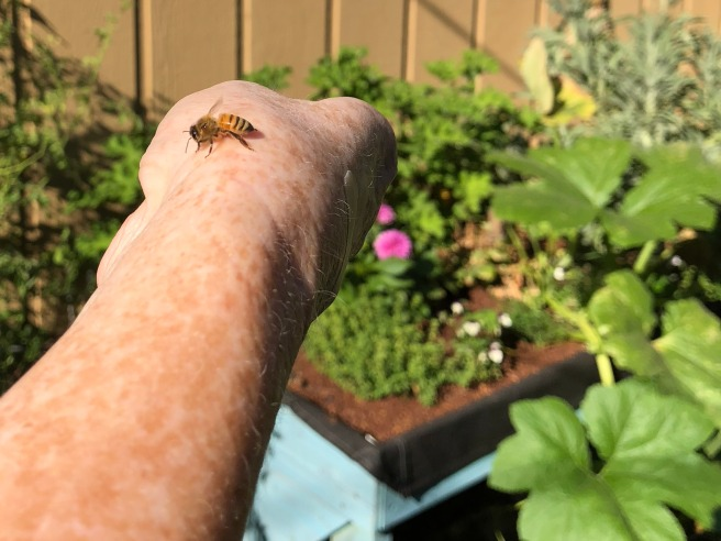 A late-season pumpkin vine grows over the edge of the box. A friendly bee rests on my hand.