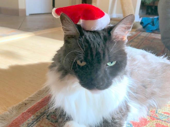 Lindy sporting Santa hat