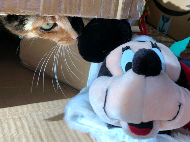 Tessa in a box near Mickey Mouse stocking
