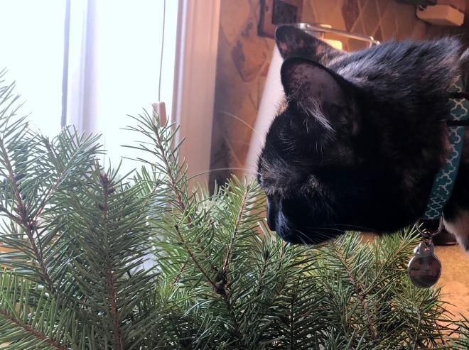 Tessa smelling Christmas greens