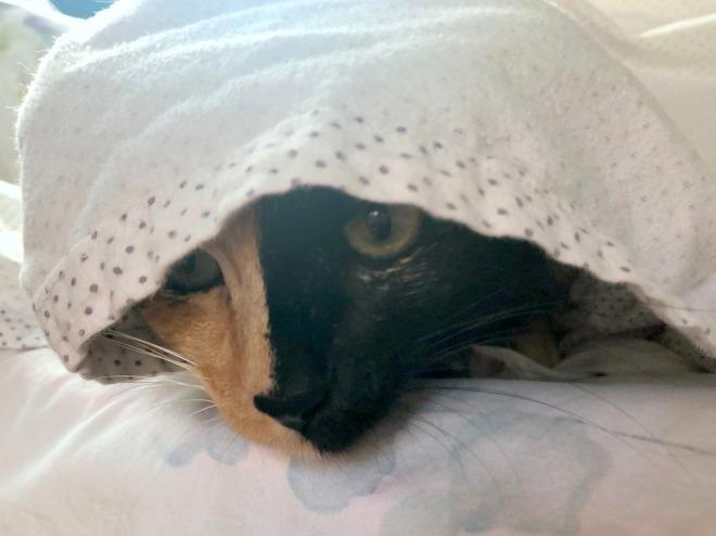 Tessa under the sheets