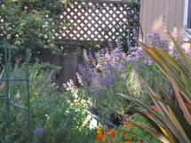 A mixture of colors and textures in the garden