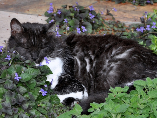 cat sleeping near cat nip