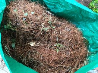 Raked pine needles