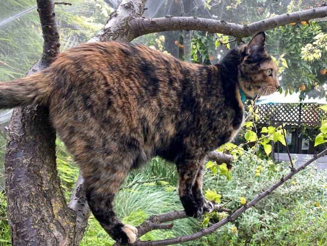 Tessa in the fruit tree