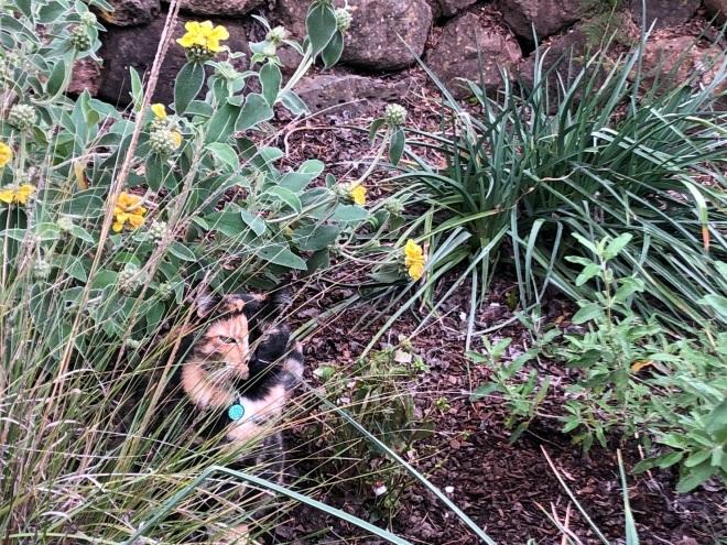 Tessa in the garden