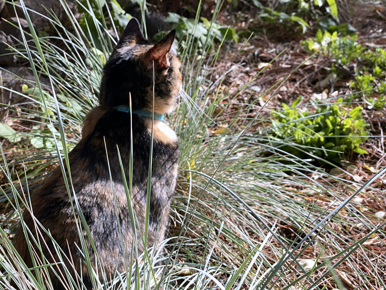 Tessa in the sun rear view