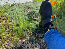 Gardening with an injured foot